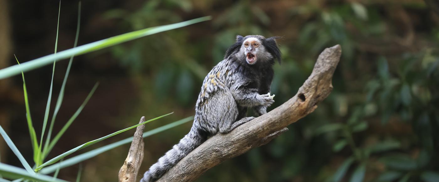 Monkey Carousel Image 1400×580